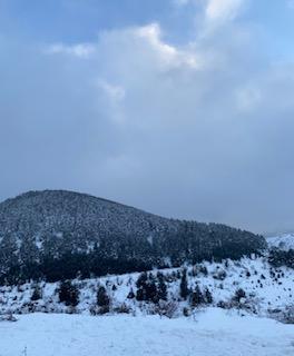 Vive la Nieve